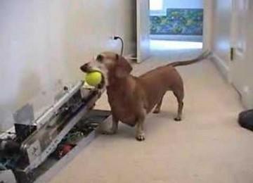 Automatsiche ballenwerper voor de hond