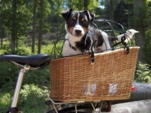 fietsnmand-hond-300x225