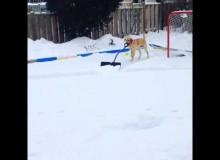 Hond Helpt Handje Met Sneeuwschuiven