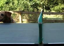 Hond Is Gek Op Tafeltennis