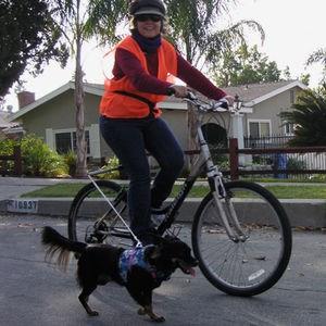 honden-springer