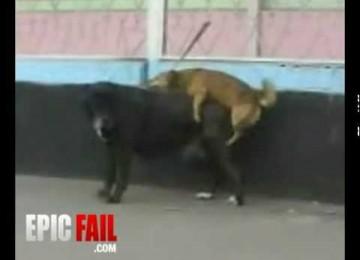 Hondje met grootheidswaan