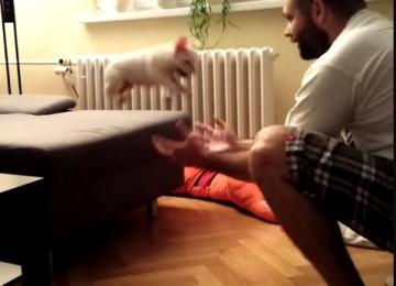 Je Kunt Het Puppy! Spring!