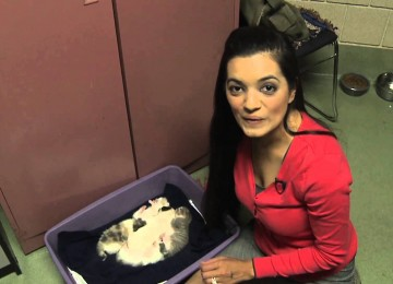 Kat Adopteert Een Pitbull Puppy