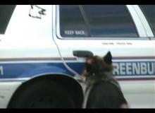 Politiehond Komt Zelf De Auto In