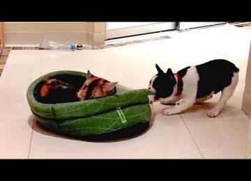 Puppy Claimt Hondenbed Terug Van Poes