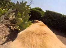 Ren, Walter, REN! Hond Rent Naar Het Strand Met GoPro