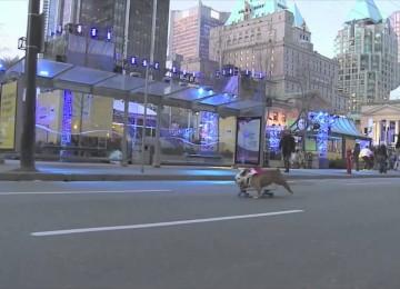 Snelste Skateboardende Hond