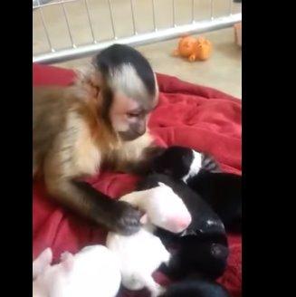 aap puppies