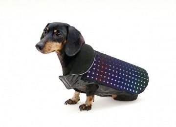 disco hond