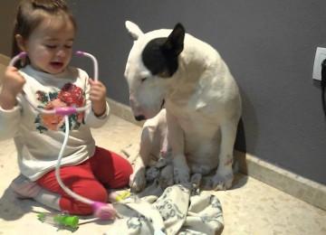 Doktertje Spelen Met De Hond