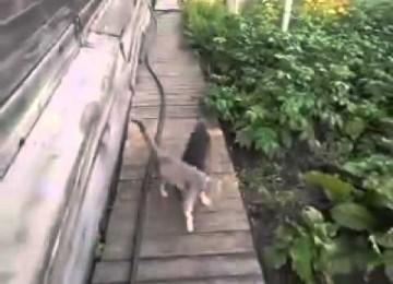 Hond Is Geleerd Om Kat Op Te Halen