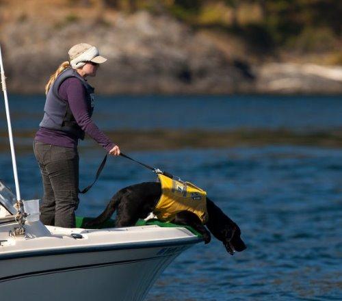 hond walvis