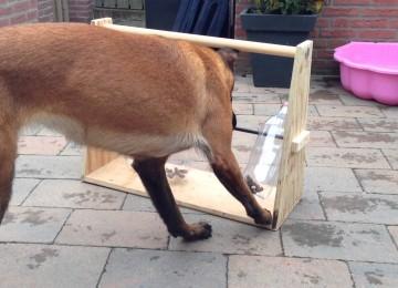 Zo Laat Je Je Hond Op Een Leuke Manier Werken Voor Zijn Koekjes