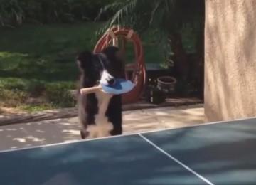 hond tafeltennis
