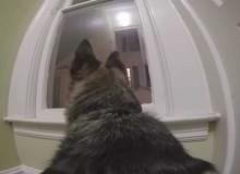 Wat Doet je Hond Als Hij Alleen Thuis Is?