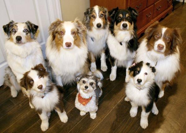 hoeveel honden