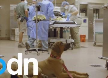Hond Wacht In Operatiekamer Terwijl Haar Verrassende Vriendje Wordt Geopereerd: Een Jachtluipaard