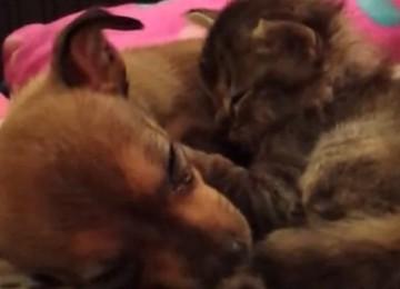 honden en kitten