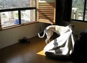 Ook Honden Houden Van Zonnen