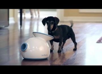 Automatische Ballenwerper Voor Hond