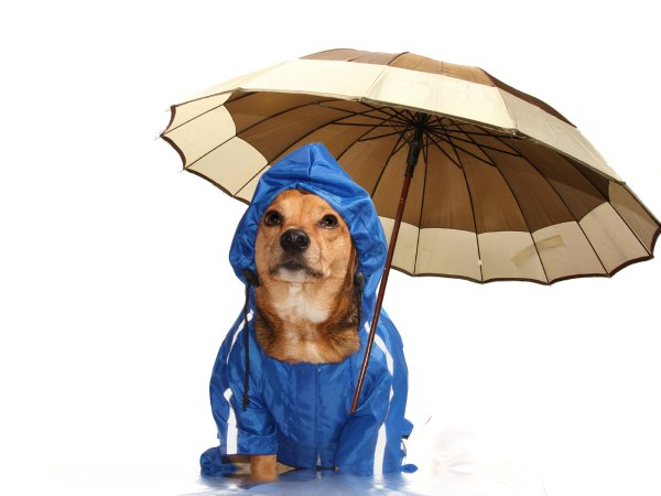hond met regenjas en paraplu