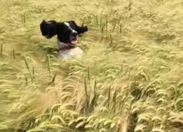 hond zoekt baasje in gras