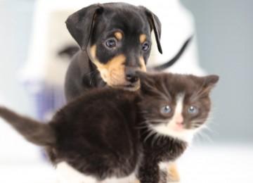 Puppies Ontmoeten Kittens Voor Het Eerst