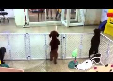 Puppy is HEEL blij om zijn Eigenaar te zien