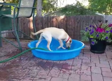 Slimme Hond Vult Zelf Het Badje