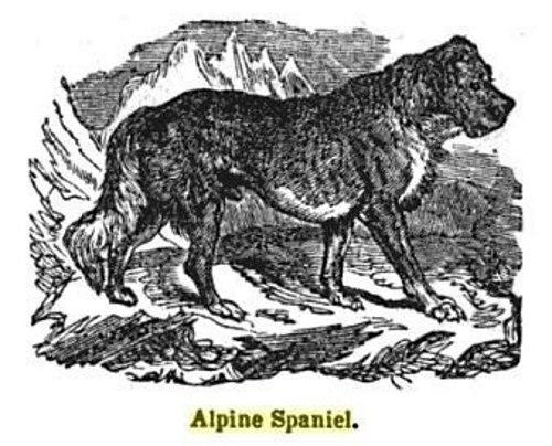 Alpine_spaniel_1848