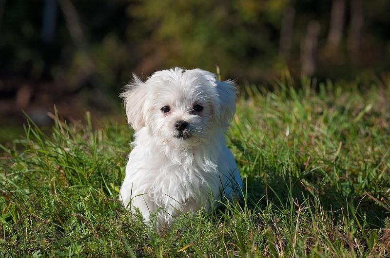 Afbeeldingsresultaat voor hondje