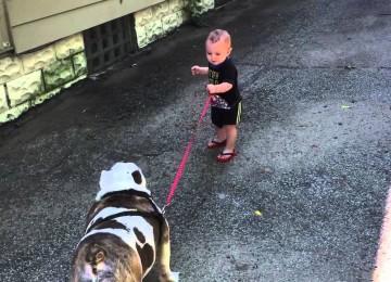 Dreumes Probeert Te Dikke Bulldog Uit Te Laten