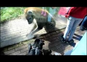 Hond Maakt Vriendjes Met Hyena in de Dierentuin