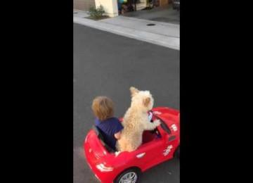 Hond Rijdt Jochie Rond in Auto