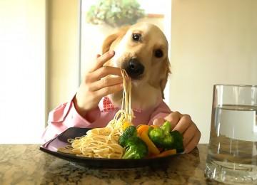 """""""Chef Hond"""" geniet van een heerlijke maaltijd"""