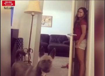 Verstoppertje Spelen Met de Hond