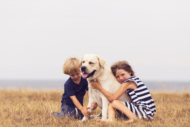 Labrador gezinshond
