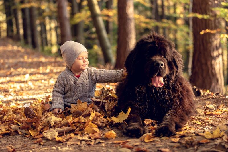 newfoundlander hond met kind