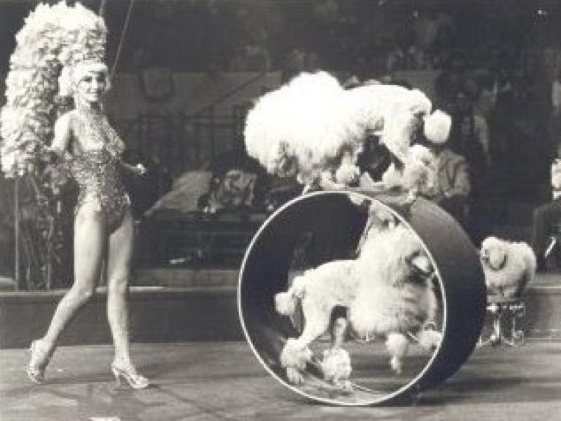 poedel circus