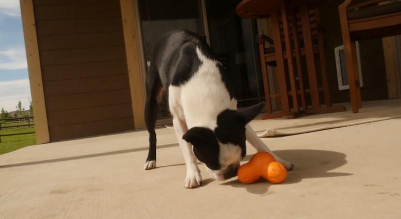 west paw design tux - sterk speeltje voor de hond