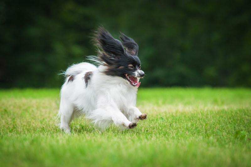 energiek hondje