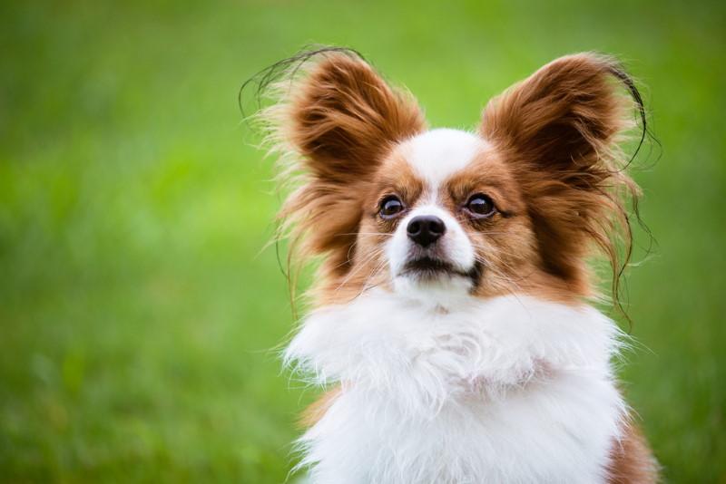 klein hondje