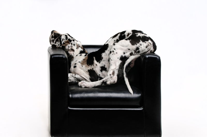 appartement hond