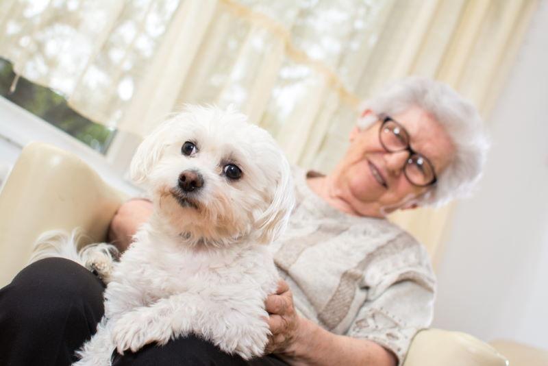 therapie hond