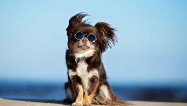 populairste honden